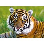 упаковка игры Пазл Тигр 500 элементов Trefl