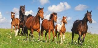 Пазл Табун лошадей 4000 элементов Castorland