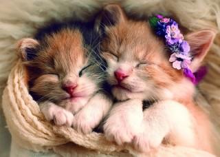 Пазл Спящие котята 500 элементов Trefl